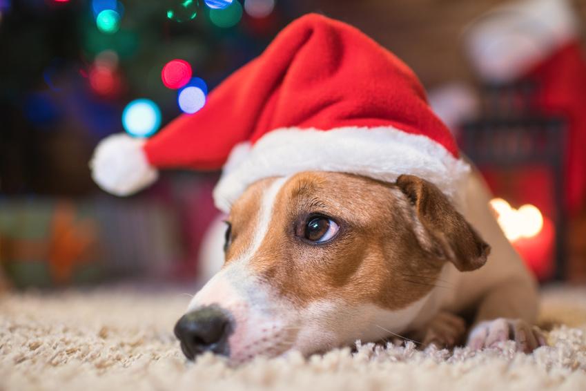 Hund mit Mütze